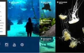Oceanário de Lisboa aposta nas redes sociais