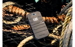 Cat-S31-01