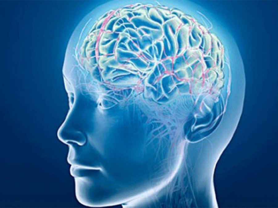Brain-New-01