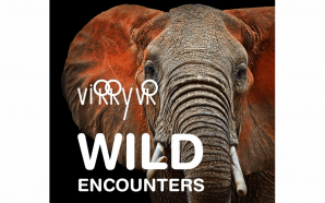 Virry VR Wild Encounters