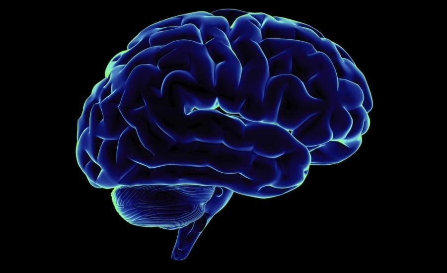 Brain Parkinson