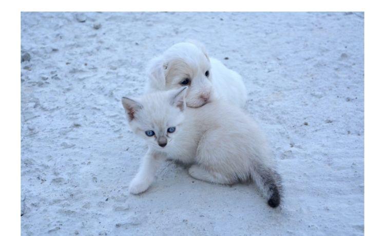 Pets New